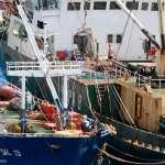 你吃下肚的是「血汗海鮮」嗎?綠色和平呼籲改善外籍漁工勞權