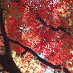 景致絕不輸日本!邊泡湯邊賞楓,北台灣最美的4條「紅葉一日遊」路線全公開