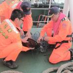 綠蠵龜、玳瑁龜受困廢棄漁網 海巡船隻發現解救