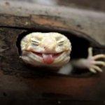 【圖輯】業餘攝影師鏡頭下的「微」動物