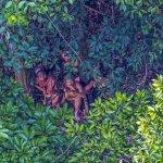巴西攝影師拍到從未與外界接觸的原住民部落