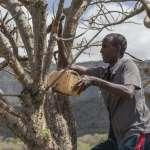 非洲之角奇蹟》不被國際承認而缺乏外援 《明鏡》:索馬利蘭發展依然突飛猛進