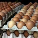 10萬芬普尼雞蛋全銷毀 近7萬活雞管制不撲殺