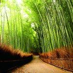 京都美景那麼多,行程怎麼排才順路?內行人公開私藏行程,7大絕景輕鬆攬盡