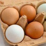 褐色雞蛋殼雖然貴一些,卻比較營養?營養師一句話奉勸消費者,不用太執著外表...