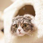 為何貓咪總「咕嚕咕嚕」叫?專家揭露驚人真相:不只高興、焦慮這麼簡單…