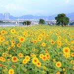 過年想好去哪兒走春?留在台灣的你,不妨參考這7處賞花打卡景點
