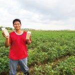 誰說台灣無法種非基改大豆?年輕人為家鄉挺身而出,改變台中海線農田風光