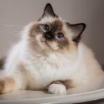為何叫名字貓都叫不來?貓奴們先別急著沮喪,這3大理由可能是牠不理人的主因