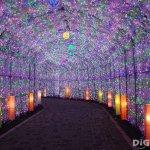 冬季到北海道不只看雪和夜景!最美、最夢幻的8大彩燈活動,看了讓人直呼好浪漫