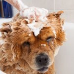 為何一聽到洗澡,毛小孩就想逃?幫寵物洗澡時,最容易犯的7個NG動作!