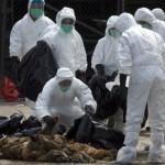 中國《南方日報》:廣州市超過三成市場受禽流感污染