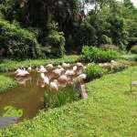禽流感疫情持續升溫,動物園加強珍禽保護
