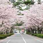 想在日本讀書,先交出100萬!留學生分享日本大學生活5大崩潰真相,台灣真的很幸福
