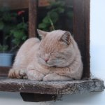 貓奴愛注意!這種病在貓身上並不普遍,甚至常常遭誤診!3天內恐奪走主子性命啊…