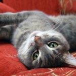 家中貓咪變得食慾不振、活力盡失?獸醫提出嚴正警告,貓奴們可要注意了!