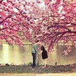 隨便拍都超浪漫!精選5處日本賞櫻景點,求婚就是要在這種地方才容易成功啊