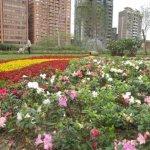 台北杜鵑花季開跑 自來水園區、溫羅汀商圈、大安森林公園……音樂會、市集活動滿檔