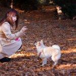 搖尾巴表開心,那如果狗狗尾巴都不動了是不開心嗎?小心,牠得了「不舉症」!