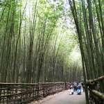 最美景點原來都藏在苗栗!內行人瘋傳的13處免費秘境,竟還有台灣版「嵐山」啊