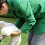 離青瓦台棄9隻珍島犬? 朴槿惠遭網民怒轟