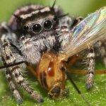 捕食動物排行榜 獨佔鰲頭──蜘蛛