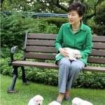 記者來鴻:寵愛動物的全國總動員!從吃狗肉到抨擊朴槿惠棄養的韓國人