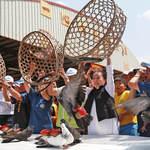 「賽鴿笭」正式起飛 義竹鄉鴿笭文化季登場