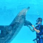 別再去水族館看海豚表演了!餓肚子挨打、訓練到病死,人類看不見的海豚之淚