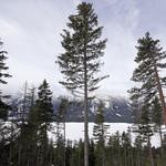 這是真正的綠色奇蹟!全世界有多少種樹木?最新統計出爐:60,065種