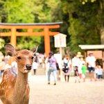 奈良的風景真的很漂亮!盤點15處最富文化氣息的私房景點,千萬別餵完鹿就走啊