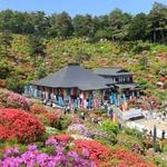 春天可不只賞櫻啊!2017年日本10大花海秘境,隨便拍都好美啊