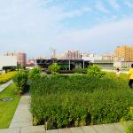 新建案大樓陽台都要有綠地?強迫植栽交屋後還不能讓它們死掉!網酸「30年後變廢墟」