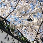 賞花不如吃團子?不想人擠人野餐賞櫻的人,東京7間餐廳將一次滿足視覺味覺雙享受