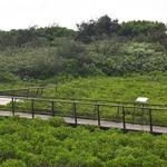 鄭文燦:打造許厝港濕地為北部生態旅遊場所