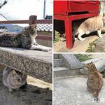 日本最迷人的貓咪散步坡道!像極吉卜力世界出現的場景,就從「千光寺」出發吧!