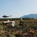 觀點投書:小農vs.大農 台灣農業的未來?