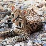川普的「美墨長城」一旦築起 環保人士憂心野生動物滅絕