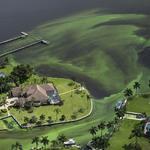美國佛州潟湖遭廢水污染   藻類暴增嚴重衝擊當地生態