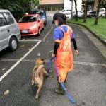 讓狗狗再次相信世界,動物之家志工蘭姐:幫助牠們社會化也是功德一件