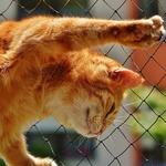 為何我家貓咪會「聽同伴的話」兇我、攻擊我?獸醫道出貓咪本性,真的不能怪牠啦