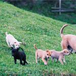 為何路上野狗滿街跑,還要花錢去買狗?他擔任中途多年,道出品種犬最殘忍真相