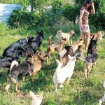 一個人照顧150隻流浪狗、堅持一隻一隻送到領養人的家!她對流浪動物的付出令人動容