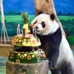 圓仔歡慶4歲生日 卻因「假孕」不吃蛋糕