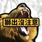 獅出沒注意!南非國家公園4隻雄獅逃跑 園方籲請附近民眾「提高警覺」