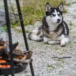 為何狗狗那麼可愛黏人?科學家這項發現,揭穿牠們之所以與狼不同的驚人原因…