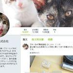 和貓一起上班吧!人才流失嚴重 日本企業導入寵物福利制度