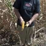 全球暖化惹禍!歐洲熱浪造成中歐與東南歐農作物銳減 農夫苦不堪言