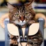 寵物針灸大受歡迎:你願意帶貓咪一試嗎?
