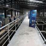 海科館展示養殖成果 珍貴魚種水中悠游
